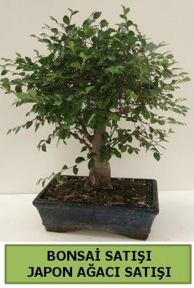 Minyatür bonsai japon ağacı satışı  Hatay çiçek siparişi vermek