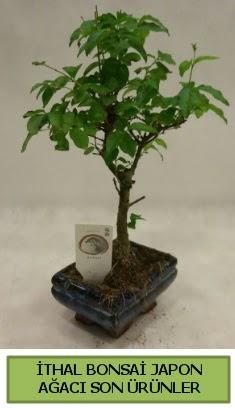 İthal bonsai japon ağacı bitkisi  Hatay çiçekçi telefonları