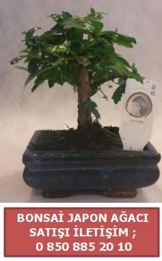 Japon ağacı minyaür bonsai satışı  Hatay uluslararası çiçek gönderme