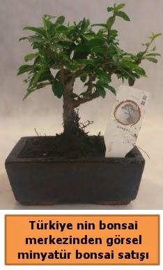 Japon ağacı bonsai satışı ithal görsel  Hatay online çiçek gönderme sipariş