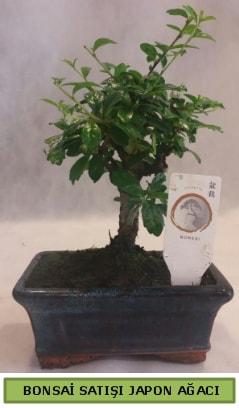 Minyatür bonsai ağacı satışı  Hatay cicek , cicekci