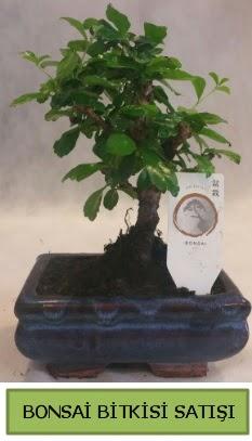 Bonsai ithal görsel minyatür japon ağacı  Hatay anneler günü çiçek yolla