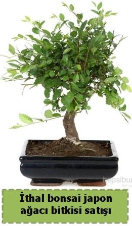 İthal bonsai saksı çiçeği Japon ağacı satışı  Hatay internetten çiçek siparişi