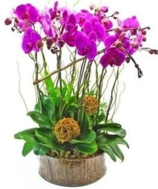Ahşap kütükte lila mor orkide 8 li  Hatay çiçek mağazası , çiçekçi adresleri