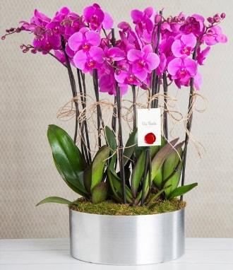 11 dallı mor orkide metal vazoda  Hatay çiçek siparişi vermek