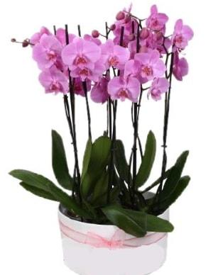 Beyaz seramik içerisinde 7 dallı mor orkide  Hatay cicekciler , cicek siparisi