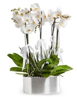 Beş dallı metal saksıda beyaz orkide  Hatay online çiçek gönderme sipariş