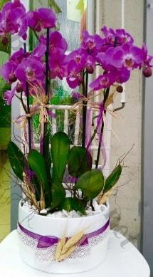 Seramik vazoda 4 dallı mor lila orkide  Hatay online çiçekçi , çiçek siparişi