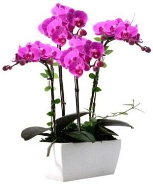 Seramik vazo içerisinde 4 dallı mor orkide  Hatay uluslararası çiçek gönderme