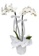 2 dallı beyaz orkide  Hatay çiçekçi mağazası