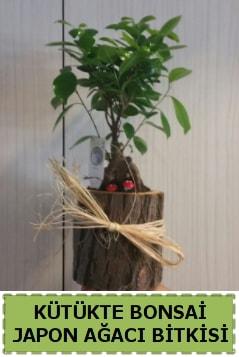 Kütük içerisinde doğal bonsai ağacı  Hatay cicekciler , cicek siparisi