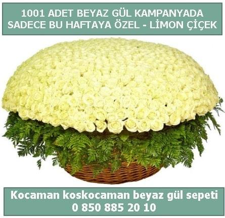 1001 adet beyaz gül sepeti özel kampanyada  Hatay çiçek siparişi vermek