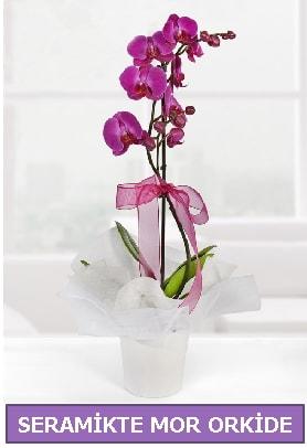 Seramik içerisinde birinci kalite tek dallı mor orkide  Hatay internetten çiçek siparişi
