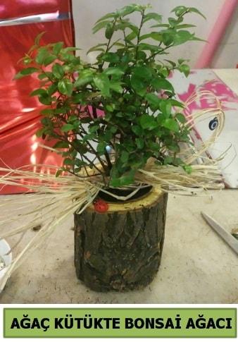 Doğal ağaç kütük içerisinde bonsai ağacı  Hatay çiçek siparişi vermek