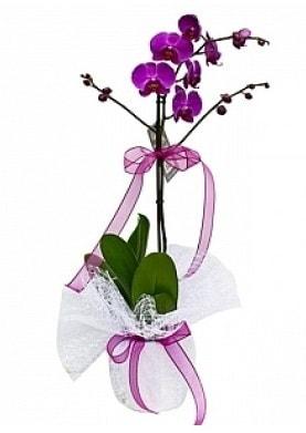 Tekli Mor Orkide  Hatay online çiçek gönderme sipariş