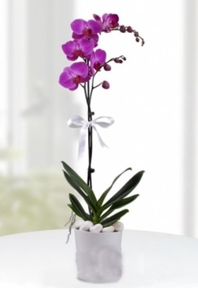 Tek dallı saksıda mor orkide çiçeği  Hatay kaliteli taze ve ucuz çiçekler