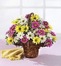 Hatay kaliteli taze ve ucuz çiçekler  Mevsim çiçekleri sepeti